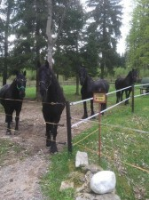 Stall Noack-Ranch Bild 3